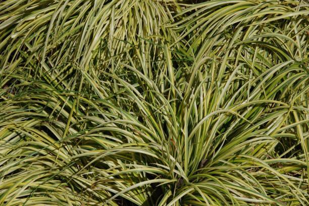 Yellow-Green Grass Plants stock photo