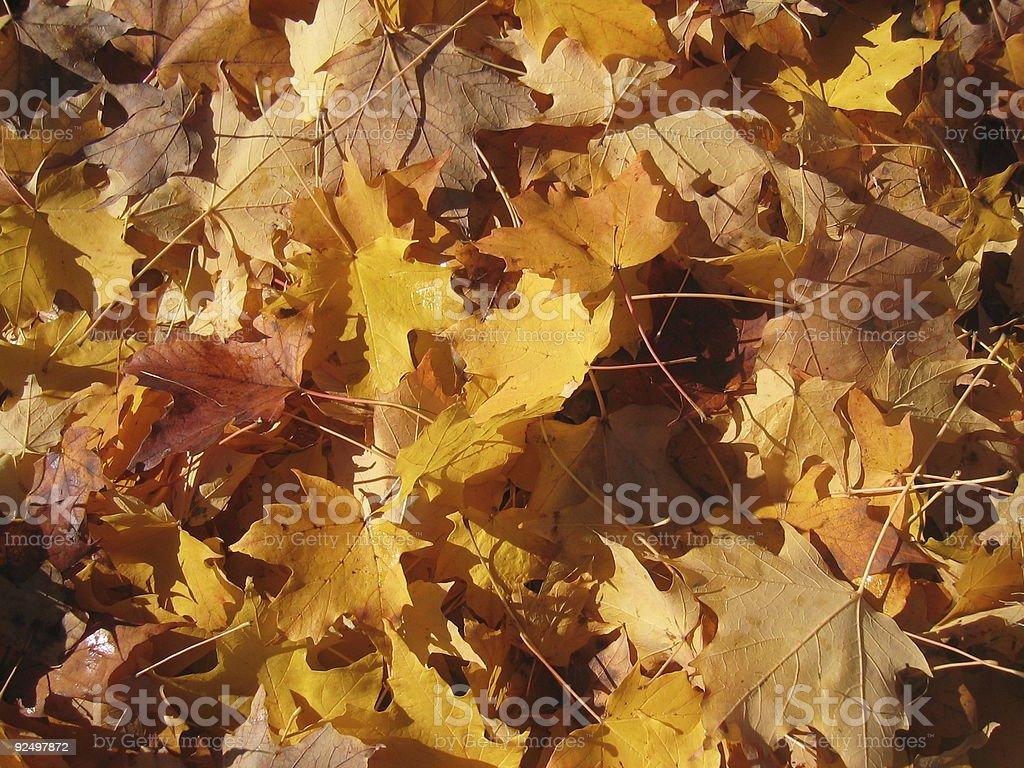 Yellow/Orange Autumn Leaves royalty-free stock photo