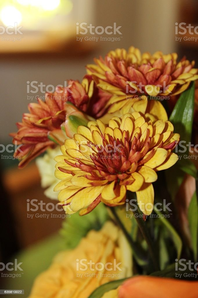 Yellow/Orange/Brown Chrysanthemum stock photo