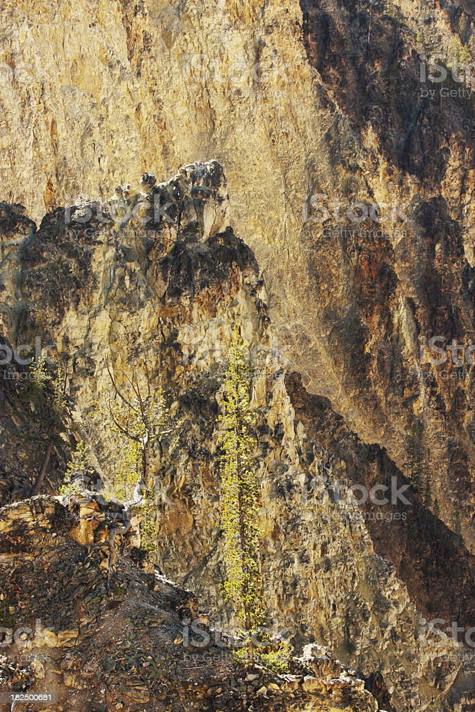 Yellowstone Canyon Pine Tree Cliff royalty-free stock photo