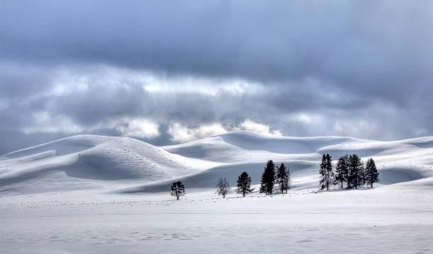 Yellowstone Hayden Valley stock photo