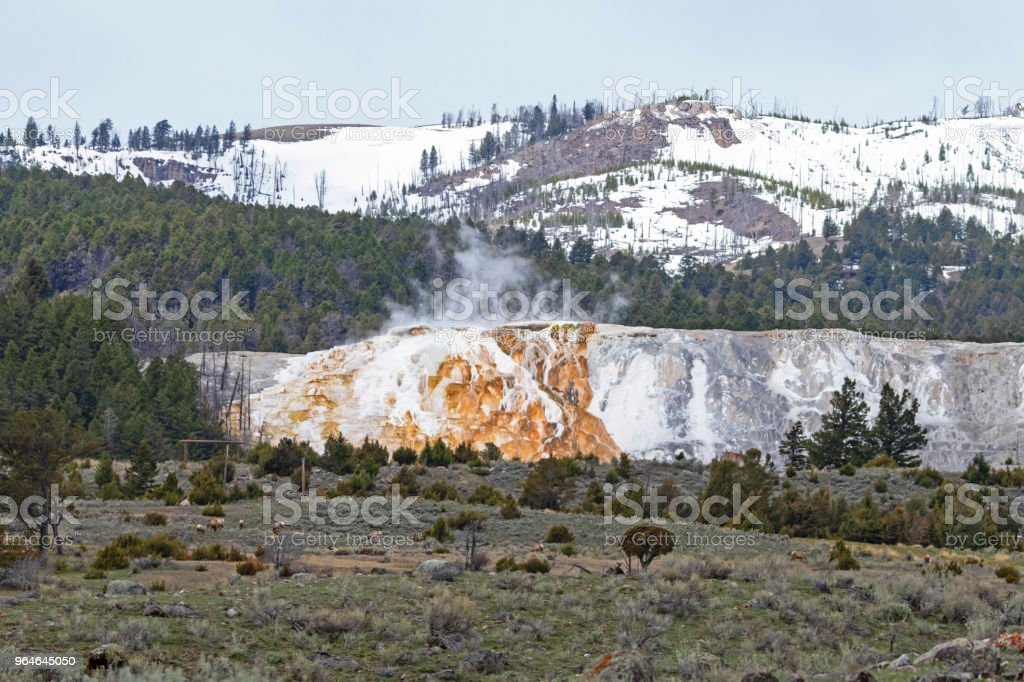 Yellowstone hot springs in the spring royalty-free stock photo