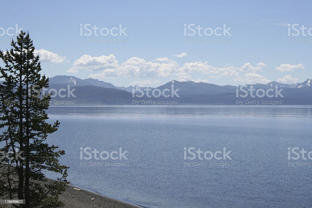 Yellowstone Lake and Tree royalty-free stock photo