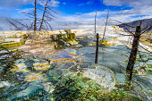 Mammoth Hot Springs feature in Yellowstone National Park