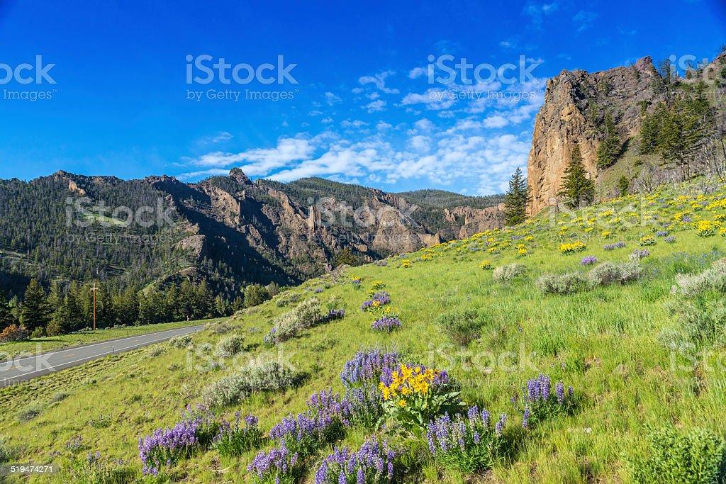 Yellowstone National Park stock photo