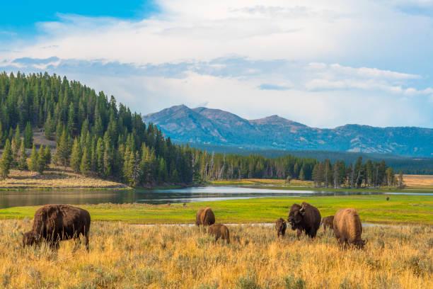 yellowstone, nationaal park, wyoming, verenigde staten - nationaal park stockfoto's en -beelden