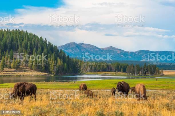 Photo of Yellowstone, National Park, Wyoming, USA