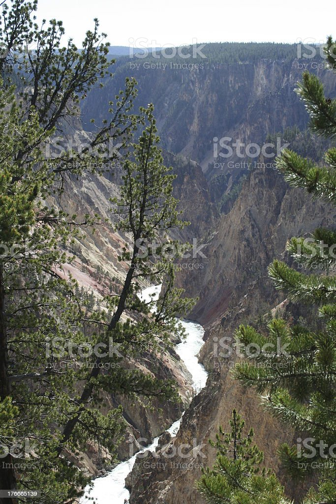 Yellowstone River and Trees royalty-free stock photo