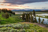 A hillside of wildflowers in the Hayden Valley with sunset reflected in the Yellowstone River in Yellowstone National Park, Wyoming.