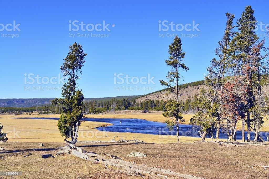 Yellowstone River Trout Fisherman royalty-free stock photo