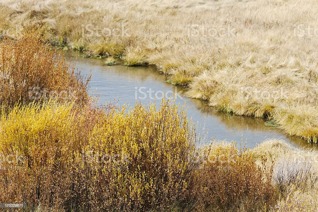 Yellowstone Stream royalty-free stock photo