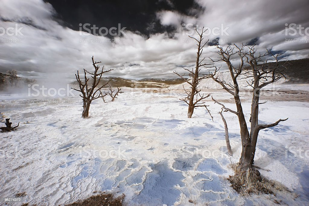 Yellowstone Terraces and Trees, Infarred stock photo