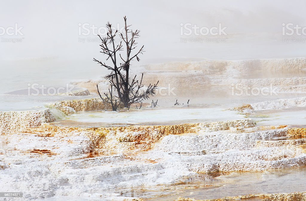 Yellowstone Terraces royalty-free stock photo