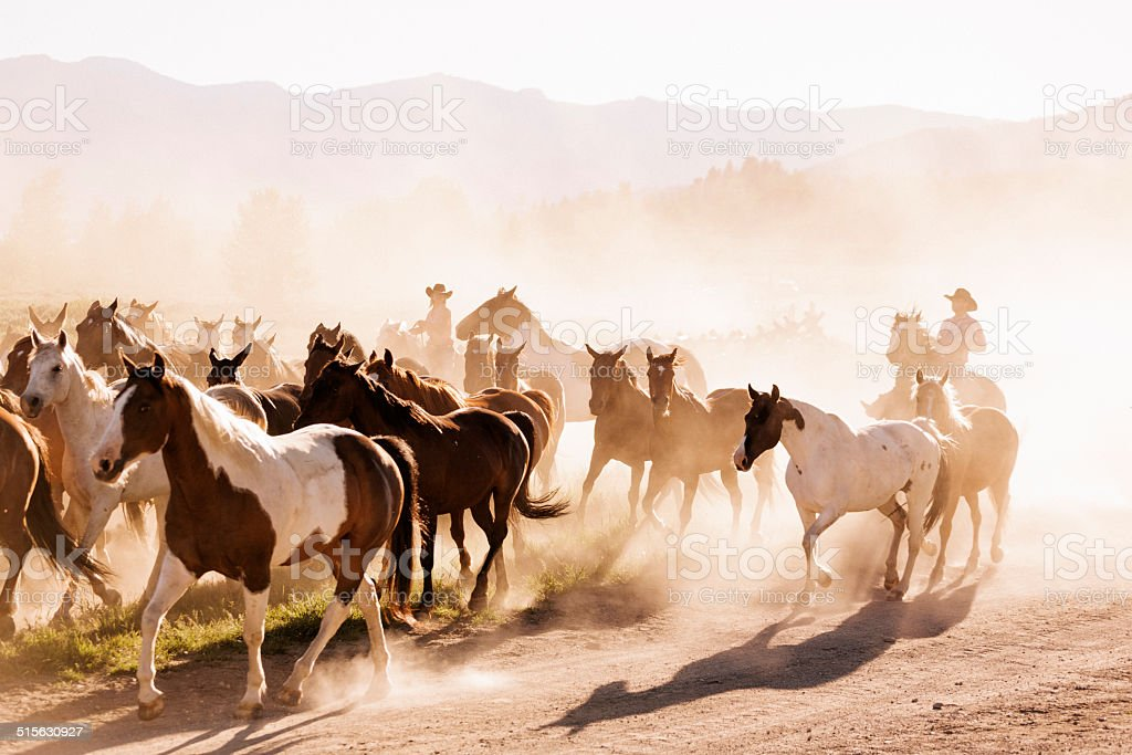 Yellowstone wranglers stock photo