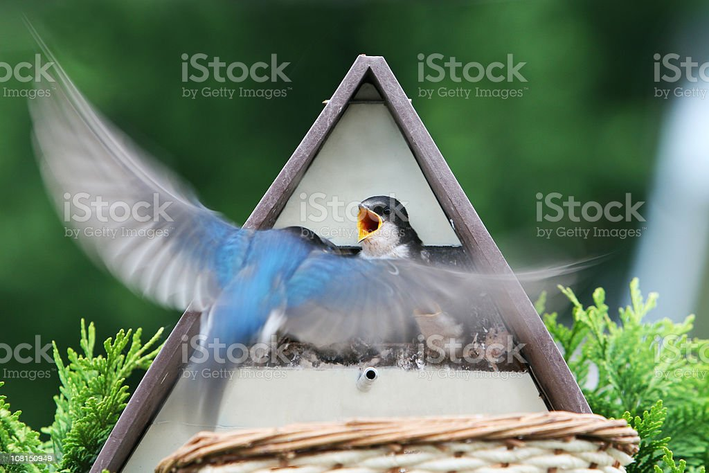 Yes, I'm coming!!! royalty-free stock photo
