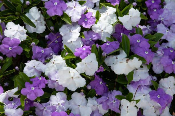 Gestern-heute-morgen Pflanzenblüte – Foto