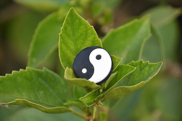 yin yang in a leaf - yin yang symbol stock pictures, royalty-free photos & images