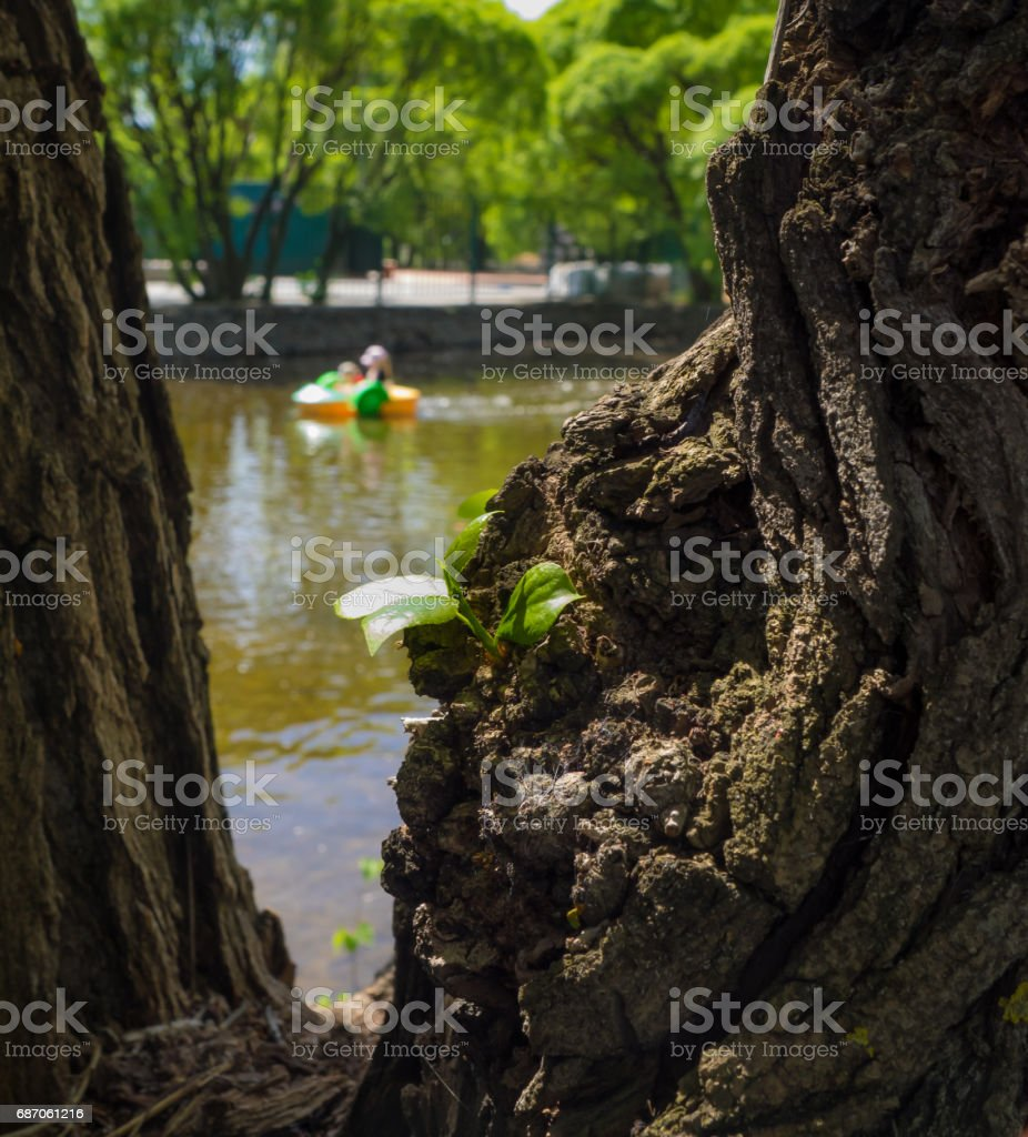 Yjung tree shooter. stock photo