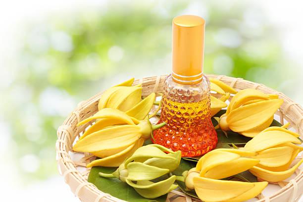 hoa ylang-ylang, hoa thơm vàng trên nền thiên nhiên - ylang ylang oil hình ảnh sẵn có, bức ảnh & hình ảnh trả phí bản quyền một lần