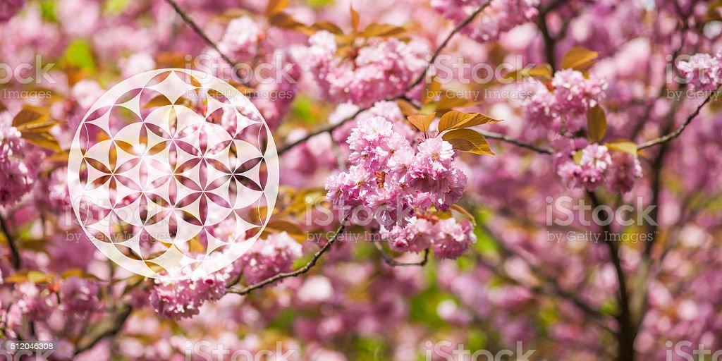 Yoga chakra symbol flower of life, spring blossom background stock photo