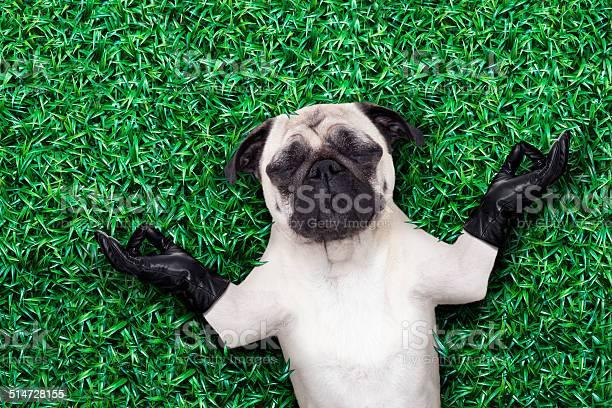Yoga dog picture id514728155?b=1&k=6&m=514728155&s=612x612&h=1myykdrhfdrhld htpv3tu5i7mqkr qdpp3s0s2vh a=