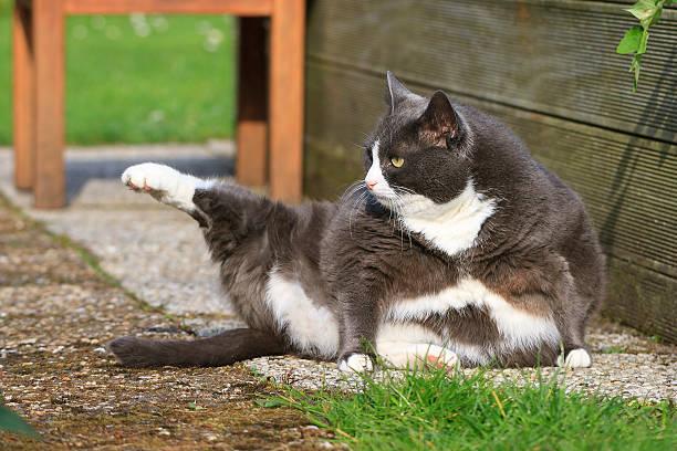 Yoga obesicat stock photo