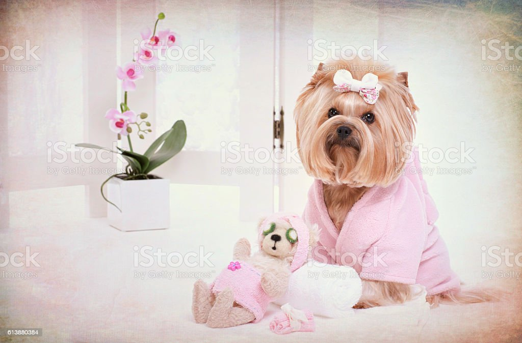 Yorkie and Teddy Bear Friend at the Beauty Salon Spa on Textured and...