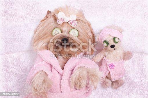 istock Yorkie Dog and Teddy Bear Friend at the Beauty  Salon 505524522