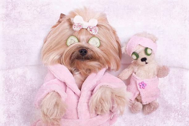 Yorkie dog and teddy bear friend at the beauty salon picture id505524522?b=1&k=6&m=505524522&s=612x612&w=0&h=nkoceu0o bepln87622 ti2wczifalaelwdbbgxmxra=