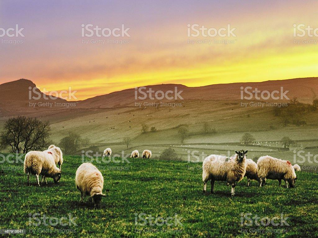 yorkshire stock photo