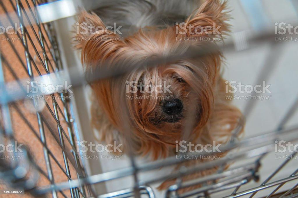 media istockphoto com/photos/yorkshire-terrier-dog