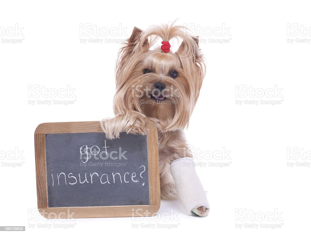 Yorkshire Terrier Holding Sign with Pet Insurance Reminder stock photo