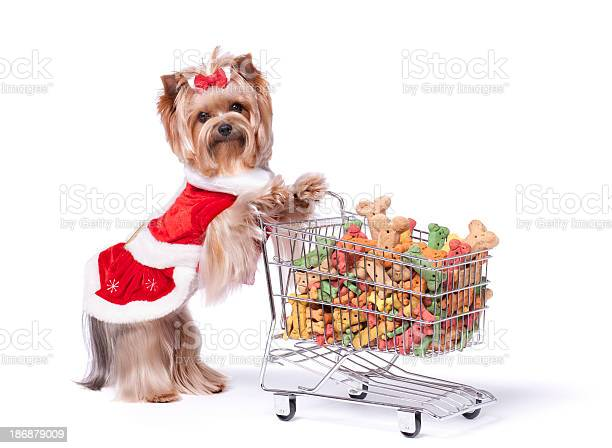 Yorkshire terrier in a dress shopping for dog biscuits picture id186879009?b=1&k=6&m=186879009&s=612x612&h=4mcwikt1eme1zq5qjds1uvpgrfiuwfdefdfdlxvjrxq=