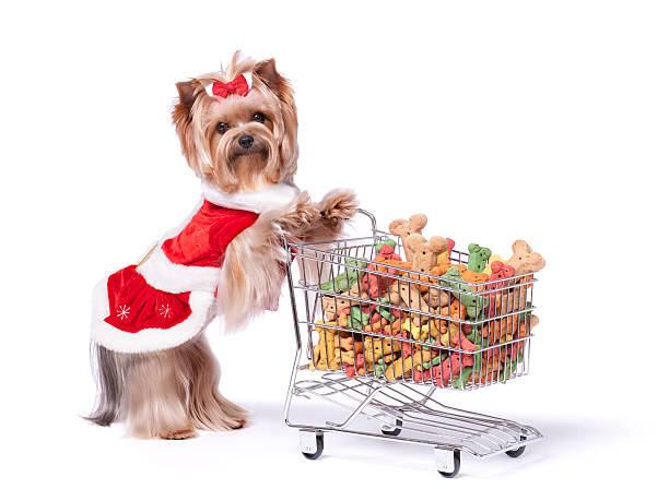 Yorkshire terrier in a dress shopping for dog biscuits picture id186879009?b=1&k=6&m=186879009&s=612x612&w=0&h=syl5o967  r0cgfr xfcneraxnanyapgq rfky6u0ua=