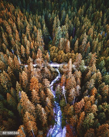 yosemite national park forest aerial view from helicopter