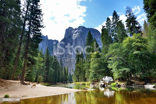 Beautiful view from the Yosemite National Park with a deer.