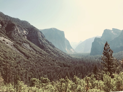 Summer time in Yosemite National Park.