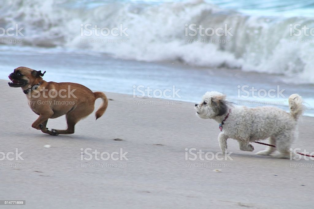 You Can't Catch Me stock photo