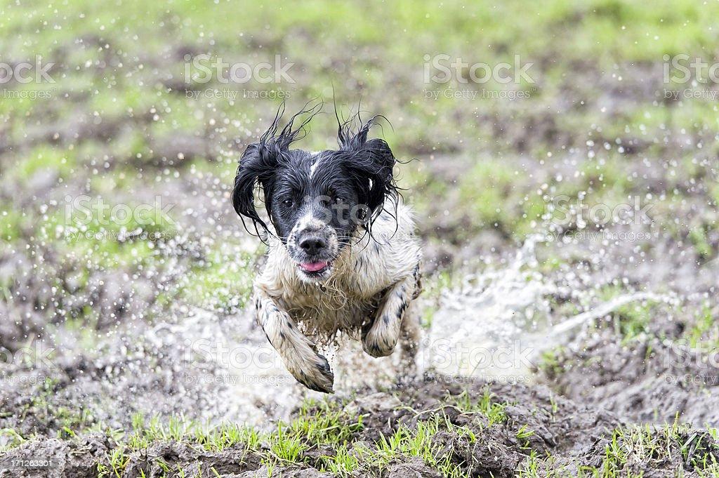 you dirty dog! stock photo
