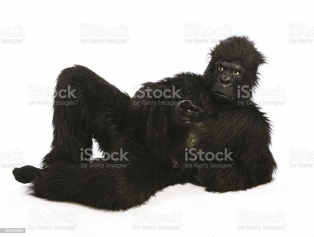 You! Gorilla royalty-free stock photo
