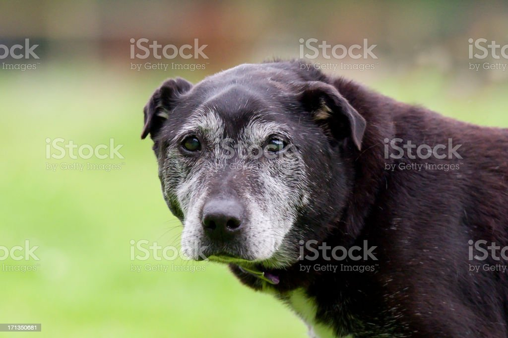You old dog stock photo