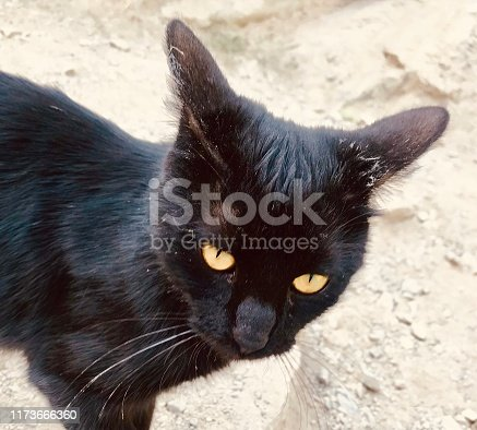 Angry wild cat in the mountain