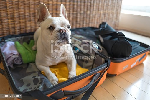 Oh adorable !  He sits on my packed clothes in suitcase and stays there. I wish I could travel with him wherever I go. Don't show me sad face buddy.....