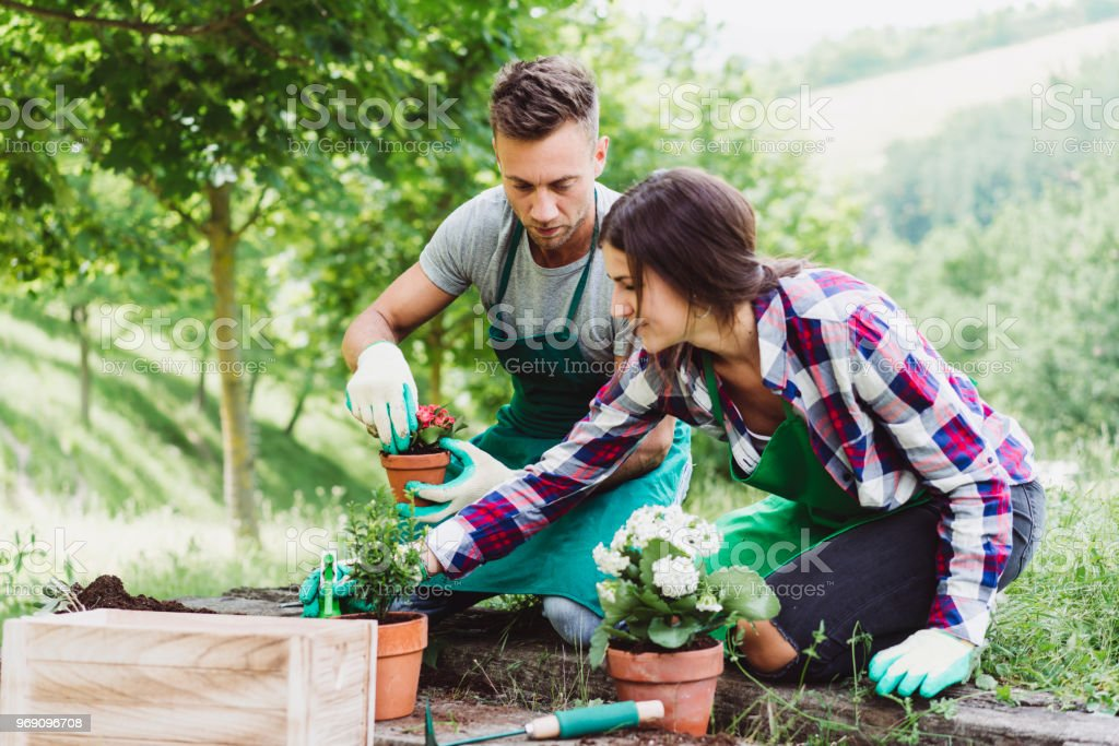 Young adult couple doing gardening together stock photo
