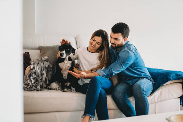 Young adult couple stroking a dog sitting on the sofa at home stock photo