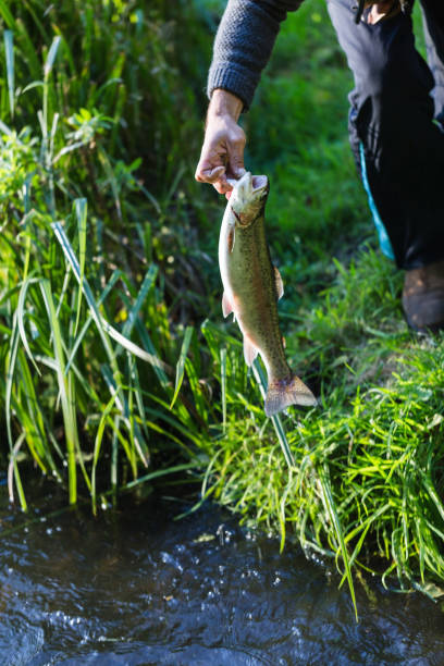 young adult fisherman caught a big trout - fishman imagens e fotografias de stock
