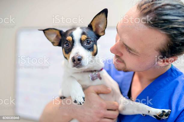 Young adult male veterinarian holding a small scared dog picture id626535946?b=1&k=6&m=626535946&s=612x612&h=ps dwv50s7vce3f3qtcvjpptubznqwt5q2qplraqtf0=