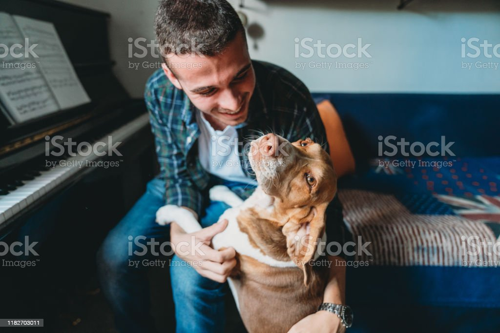 Young adult pianist man playing with his dog at home Young adult pianist man playing with his dog at home 20-29 Years Stock Photo