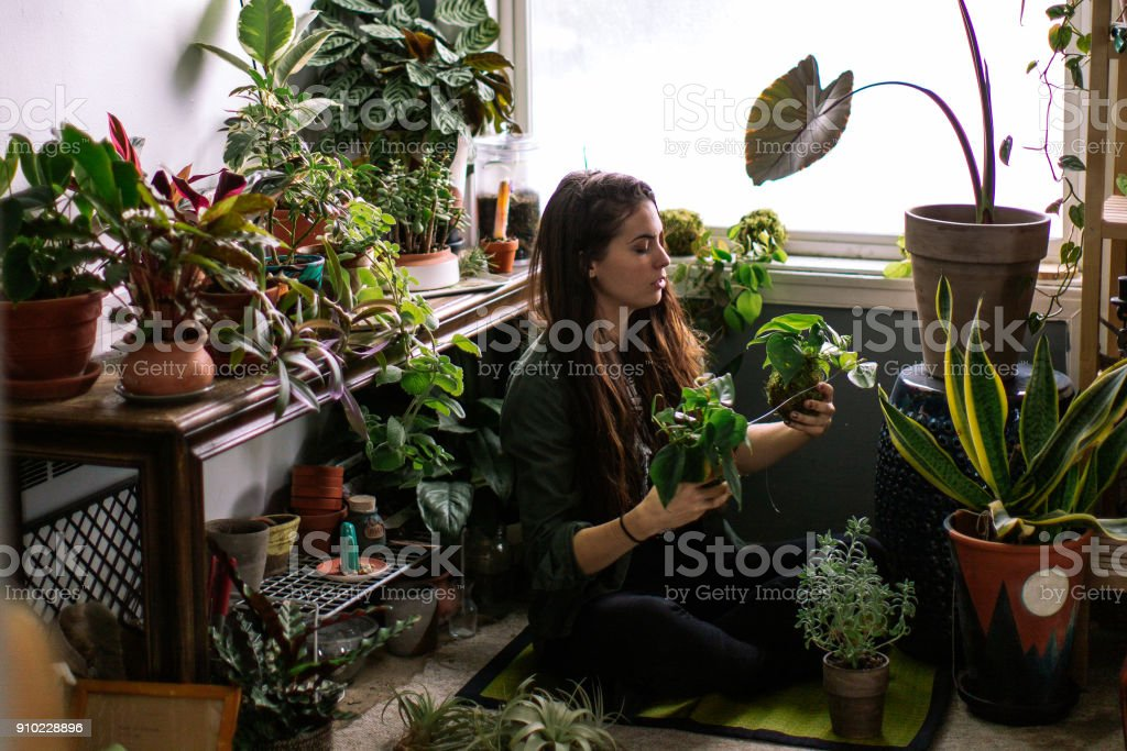 Young Adult Woman At Home Watering Indoor House Plants Lifestyle photos of a young adult woman watering her indoor plant garden. 25-29 Years Stock Photo