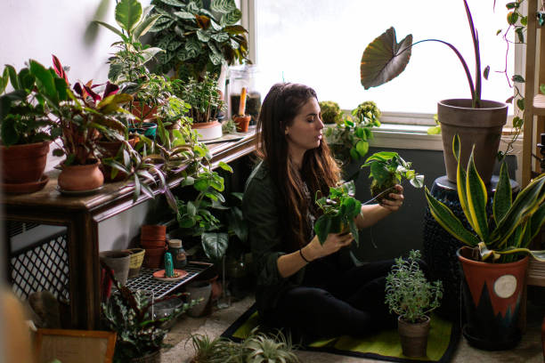 Young Adult Woman At Home Watering Indoor House Plants Lifestyle photos of a young adult woman watering her indoor plant garden. houseplant stock pictures, royalty-free photos & images